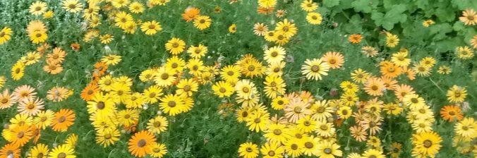 cropped-spring_flowers2-e1509695270205.jpg